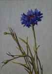 Flowers of SolitudeXXXXI